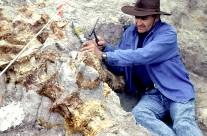 Patton Digging